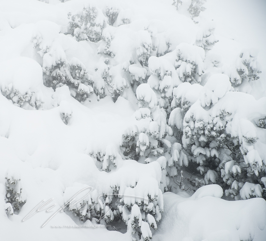 Innsbruck, Nordkette, Powder