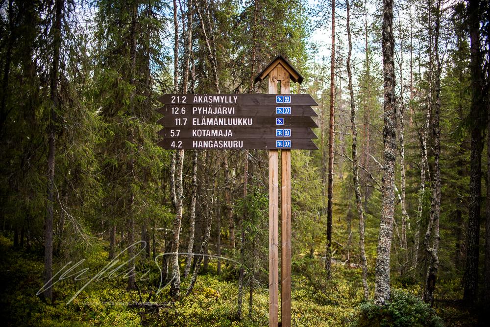 Finnland, Finland, FIneland, wandern, hiking, Lappland, Santa Claus, wandern in Finnland, hiking in Finland, trekking, berry picking