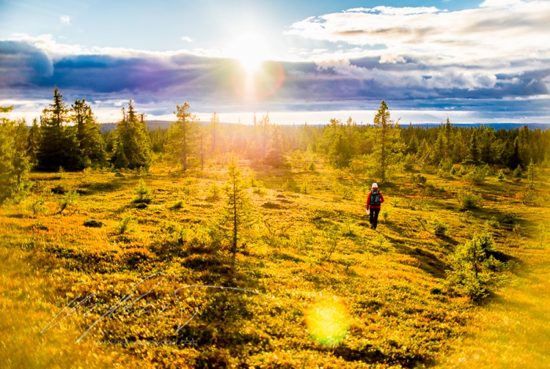 Finnland, Finland, FIneland, wandern, hiking, Lappland, Santa Claus, wandern in Finnland, hiking in Finland, trekking, berry picking